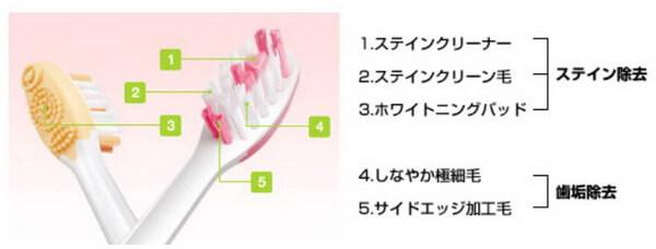 REACH 歯ブラシの役目