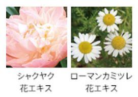フォルムの植物由来の成分